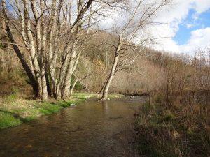 Immagine del fiume Eliceto nel territorio di Lago (CS)